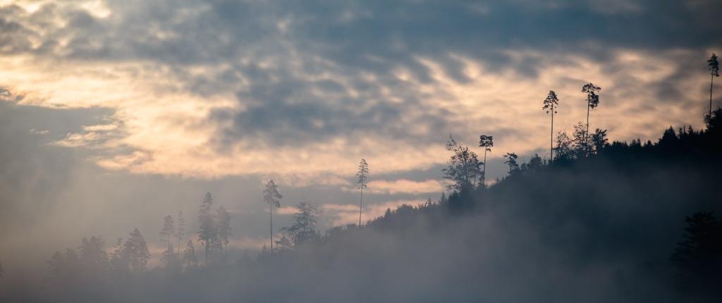 Abenteuer Schwarzwald Sommer Film Nebel