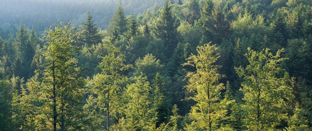 Abenteuer-Schwarzwald-Sommer-Film-Wald